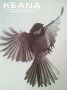 pilates-oiseau-pilates-legerete-stage-formation